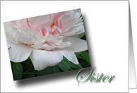 Rain Kissed White Peony Sister card