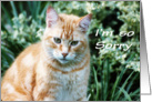 Orange Tabby Cat Apology card