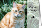 Orange Tabby Cat Sympathy card