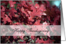 Thanksgiving Red Oak Leaves card