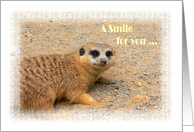 A Smile for you - Meercat card
