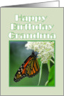 Happy Birthday Grandma Monarch Butterfly on White Milkweed Flower card