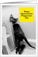 Administrative Professionals Day Cat card