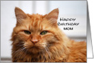 Mom Happy Birthday, Orange Maine Coon Cat card