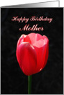 Mother Red Tulip Happy Birthday card