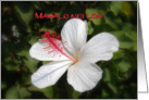 Mahalo nui loa, Thank you very much Hawaiian White Hibiscus card