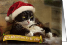 Holiday cat sits fat and jolly card