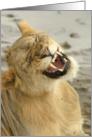 Simba Smile card