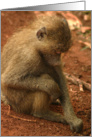 Pensive young Baboon card