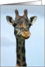 Giraffe headshot card