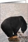 Black bear tiptoes card