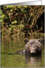 Grizzly bear swim card