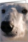 Polar Bear face card