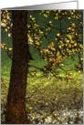 Crown Lake painted card