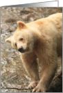 Spirit Bear shakes spray card