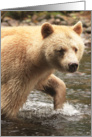 Spirit Bear water stroll card