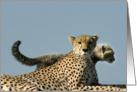 Duma Mom in Cub's profile card
