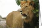 Leo conqueror card