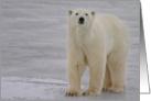 Polar Portrait on ice card