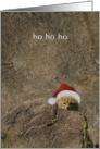 Shy but merry cheetah cub card