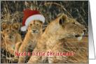 Lion in wait for Santa card