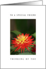 Special friend - Dahlia flower card