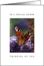 Special friend - Butterfly card