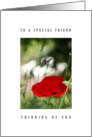 Special friend - poppy card