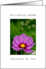 Special friend - Cosmos flower card