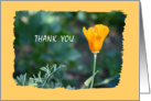 Thank You Friend Poppy card