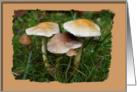 Forest Fungi blank card