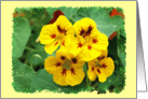 Nasturtium Flowers blank card