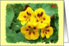 Nasturtium Flowers blank card