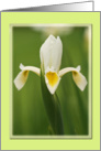 Dutch Iris blank card