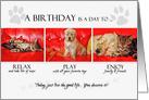 Happy Birthday Fun Kitten and Puppy card