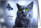 Birthday Wishes Russian Blue Cat with Butterfly card