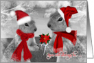 Christmas Squirrel Couple in Love for the Holiday card
