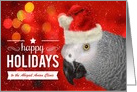 for Veterinarian - African Gray Parrot - Happy Holidays card