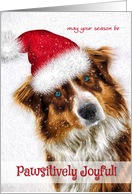 Card Which Is Always Free Of Charge So Whether Its For The Pet Sitter Or From Veterinary Office Pack You Can Choose Over
