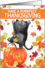 A Purrfect Thanksgiving Black Cat and Harvest Colors card