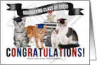 Custom Congratulations Graduate Cats Class of 2013 card