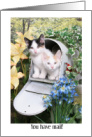 Kittens in a Mailbox Birthday card