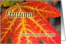 Happy Thanksgiving Fall Colors for Autumn card