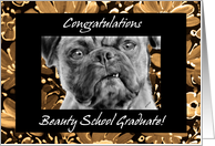 Congratulations Beauty School Graduate Funny Pug Dog card