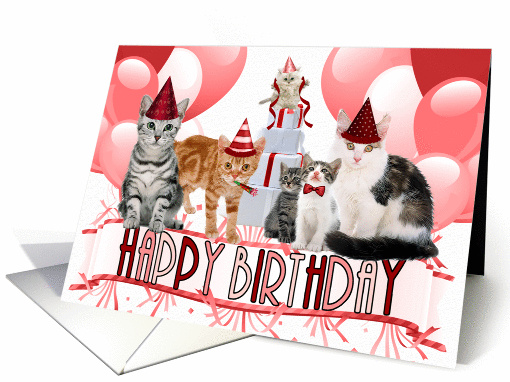 Funny Cat Birthday Cards With Stupid Cats Making Fun Of Dogs Drool