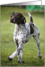German Shorthaired Pointer All Occasion Blank Note Card