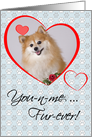 Fur-Ever Custom Photo Valentine Card