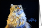 Pet Loss Sympathy Card - featuring a Himalayan Cat card
