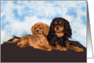 Blank card featuring a pair of Cavalier puppies card