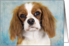 Blank card featuring a blenheim Cavalier King Charles Spaniel card